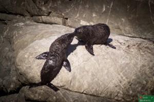 Mamy za to foki, które bez skrępowania wylegiwały się na plaży