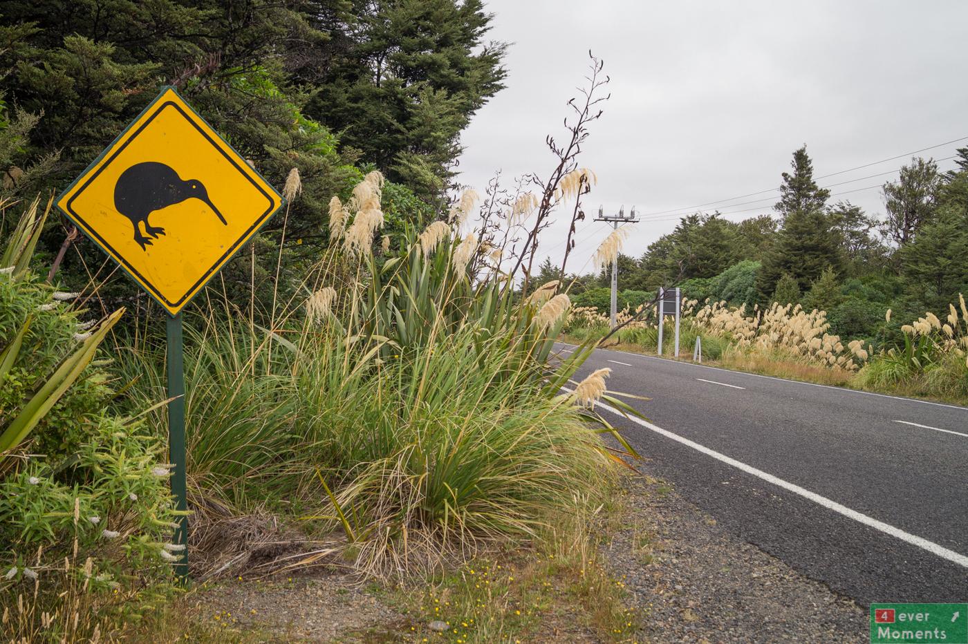 Working Holiday Visa- pierwsze kroki w Nowej Zelandii