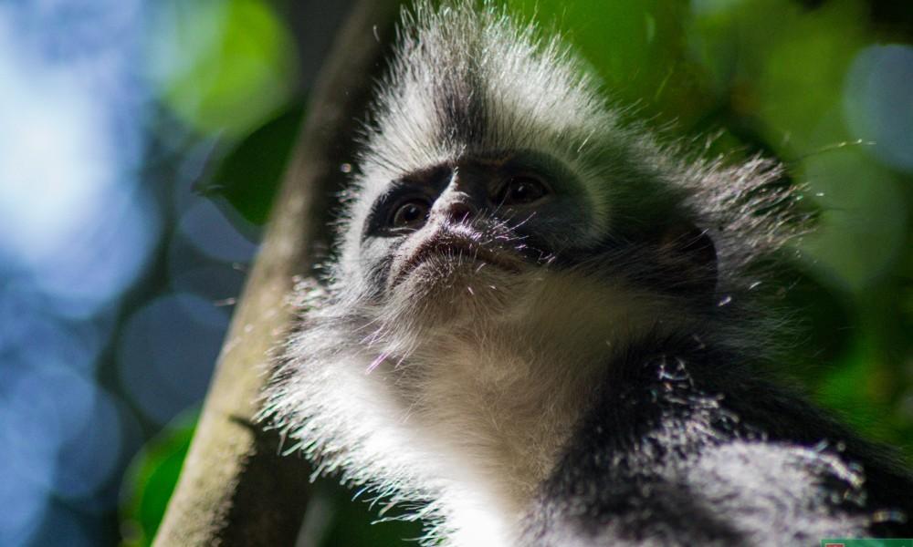 O dżungli, zwierzakach i byciu obiektywnym